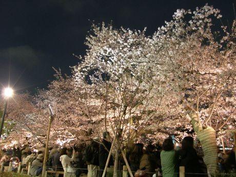 毎年100万人が訪れる人気イベント「千代田のさくら祭り」の中止が決まった(画像=昨年の様子)