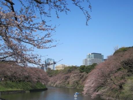 「千代田のさくらまつり」が2年ぶりに開催される(画像=昨年の千鳥ケ淵の様子)