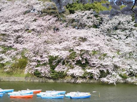 桜をバックに千鳥ヶ淵に浮かぶボート