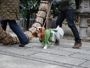 市谷亀岡八幡宮で「ペットと一緒の初詣」受付開始 出足早く予約終了枠も