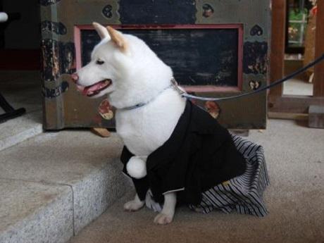 市谷亀岡八幡宮が今年の「ペットの七五三」の予約を開始(画像=過去開催時の様子)