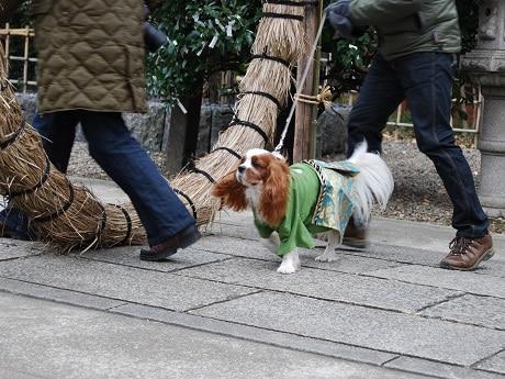 市谷亀岡八幡宮で「ペットと一緒の初詣」受付開始(画像=過去開催時の様子)