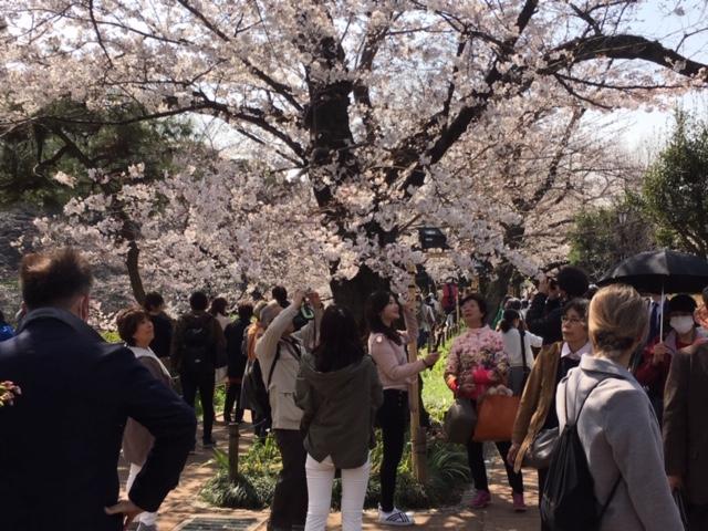 昨年の「千代田のさくらまつり」開催の様子