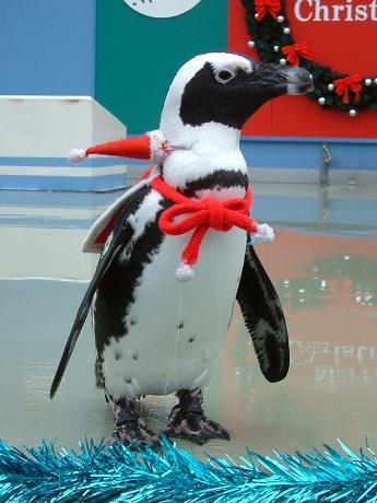 サンタコスプレのペンギン
