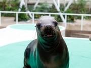 サンシャイン水族館で入場200万人突破記念企画-生き物と記念撮影も