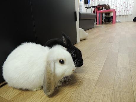 店内で遊んでいるウサギ