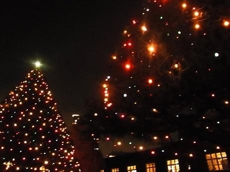 イルミネーションが点灯された立教大学2本のヒマラヤスギ