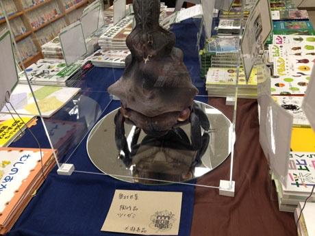 ブックフェア台中央に置かれた陶作品「ツノゼミ」(奥村巴菜さん作)