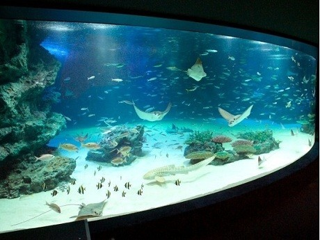 サンシャイン水族館最大ラグーン水槽