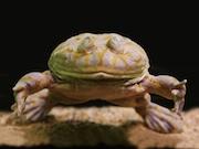 サンシャイン水族館「へんないきもの展2」が会期延長 早川いくをさんトークも