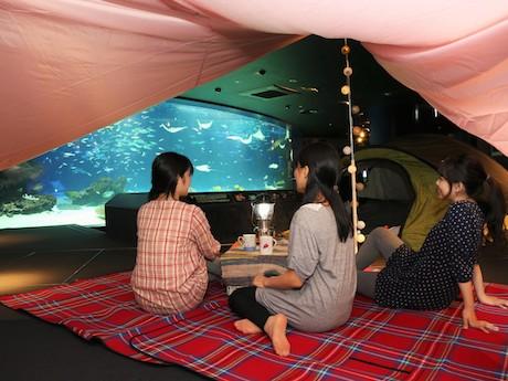 「オトナ女子の夜ふかし水族館」のイメージ