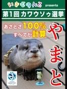 「カワウソゥ選挙」にサンシャイン水族館から6頭がエントリー