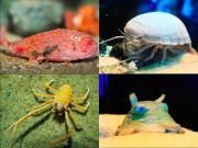 サンシャイン水族館で深海生物展 見て触って味わえる企画など
