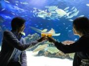 館内で泳ぐ生き物たちを眺めたりしながらアルコールなどが楽しめる「天空酒場」