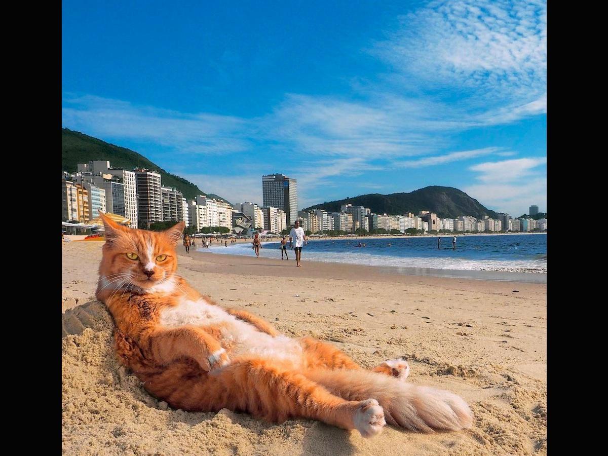 ブラジル・リオデジャネイロ南東部のコパカバーナビーチで人気というネコの「シキンニョ」 ©Mitsuaki Iwago
