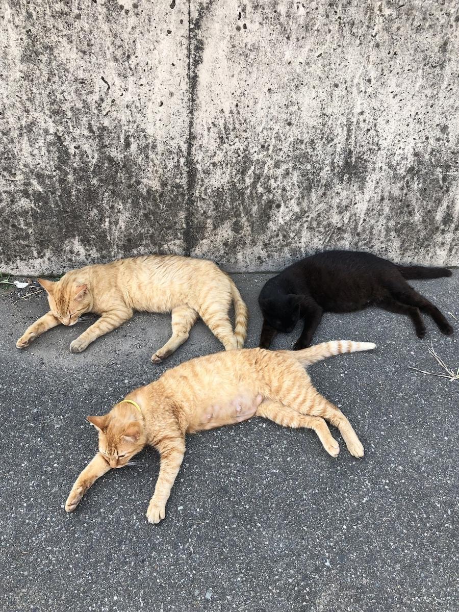 飼い主のいない猫との共生について考える