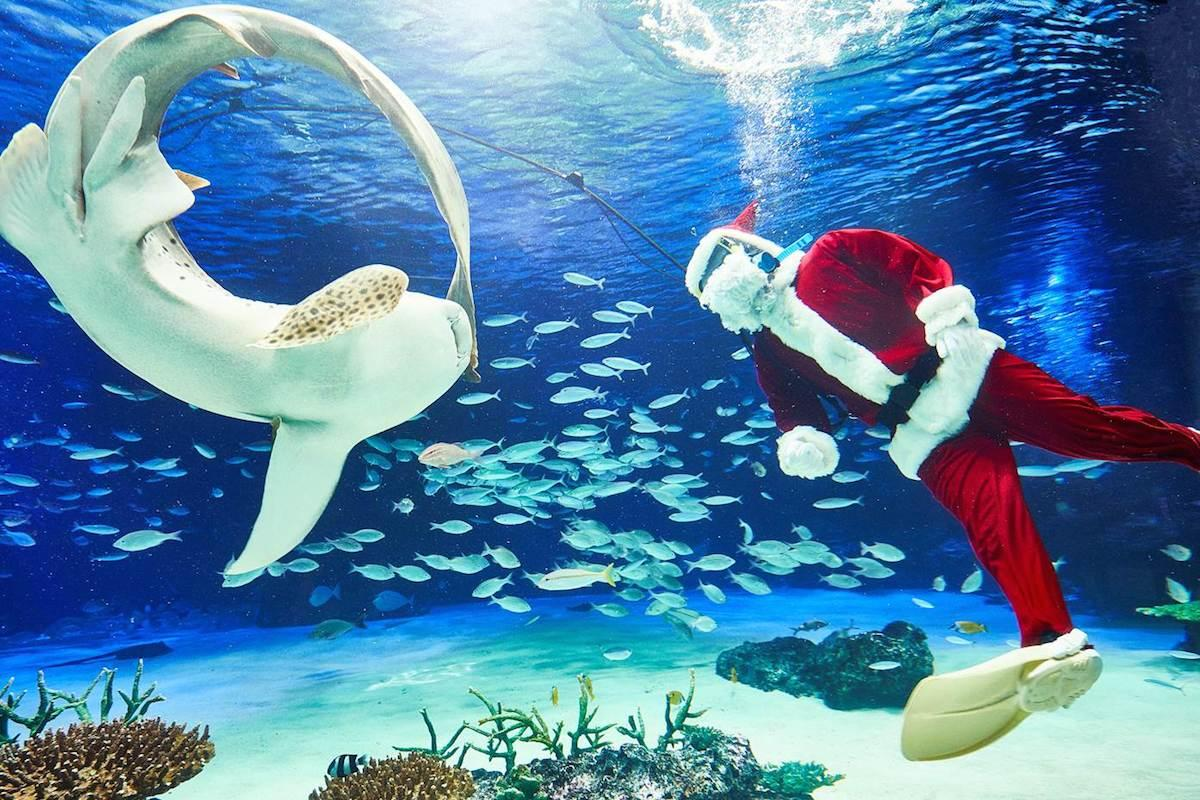 クリスマスver.の水中パフォーマンス
