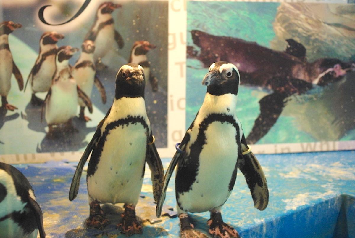 「ペンギンのいるBAR池袋」のペンギン