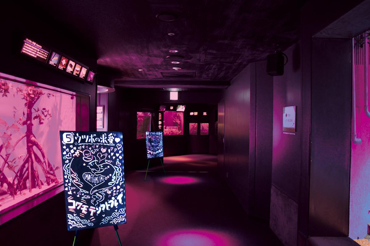 期間中、水族館全体の展示水槽や照明がピンクに