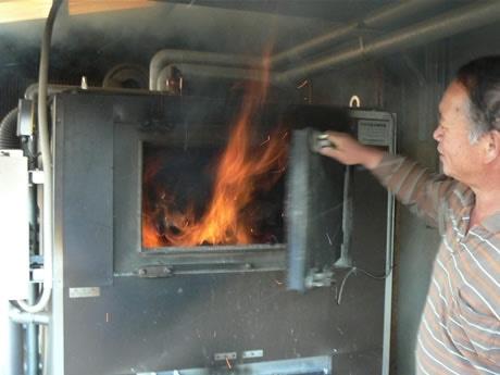 まきボイラーの火力を見せてくれる川口さん。周囲はビニールハウスが立ち並び、まきボイラーで沸かした湯をパイプを通して9棟のハウスに送っている。温度管理はすべて温度センサーで自動化している。木を燃やすのでカーボンニュートラル。