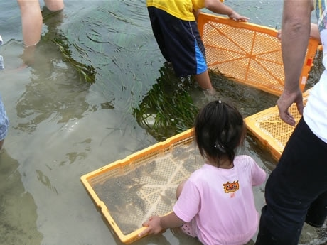 創業100年を超える伊勢の老舗食品加工会社2社が「海づくりプロジェクト」として「アマモ場と干潟の生きもの観察会」への協力とタイとヒラメの稚魚放流。写真はヒラメの稚魚。
