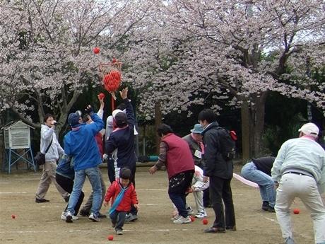 かつて「宝石の島」といわれた真珠イカダ浮かぶ英虞湾の中央に位置する間崎島で島民あげての運動会が開催された。伊勢志摩国立公園を制定した石原円吉翁が植えた「円吉桜」が満開。