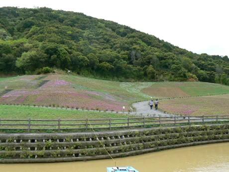 約10万本の芝桜のじゅうたん、ピンクや白、紫に色鮮やかに-志摩に新名所