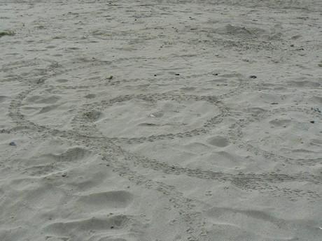 ふ化したばかりのウミガメの赤ちゃんグルグルと円を描いて迷走、志摩・国府浜で