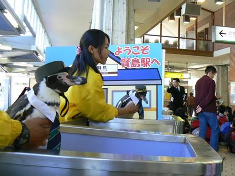 ペンギン駅長就任1周年、改札口で乗客を出迎える志摩ちゃん(奥)