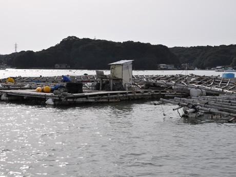 「津波」断続的に-伊勢志摩でも漁船沈没、真珠やタイ養殖のイカダ流される被害も