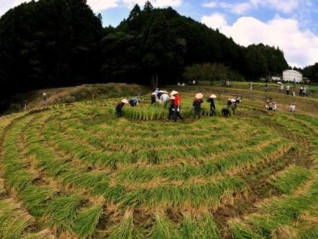 グーグルマップでもクッキリ見える多気町の真円の田んぼ「車田」で稲刈り