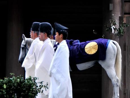 「神様に仕える馬」になる儀式-皇室から贈られた白馬2頭、伊勢神宮に
