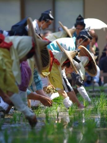 変な踊り「ハエーヤハエ」で豊年願う-伊勢・猿田彦神社でお田植え祭り