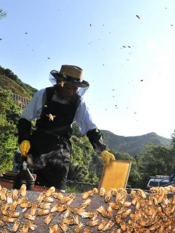 国産にこだわる南伊勢町の養蜂家、地元の蜂蜜取り終え、まもなく北海道へ