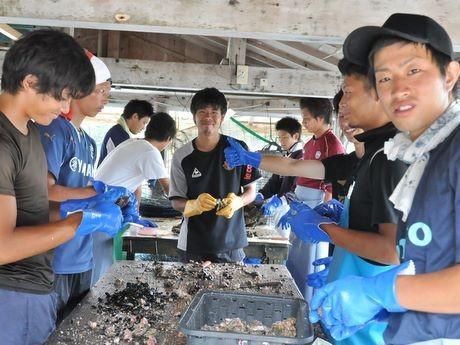 関西大学サッカー部、志摩でサッカーせずに真珠貝の掃除など社会貢献活動