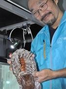 3年11カ月絶食-鳥羽水族館「ダイオウグソクムシ」に飼育員困惑