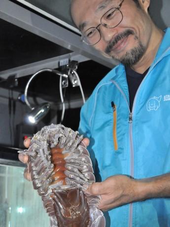 3年11カ月絶食の「ダイオウグソクムシ」-鳥羽水族館の飼育員森滝丈也さんも困惑。愛おしく「No.1」を持ち上げる森滝さん