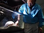 「またもや餌食べず」1432日間絶食中の深海生物-鳥羽水族館のダイオウグソクムシ