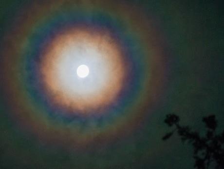 夜の伊勢神宮外宮の森の上空に「月の輪」-新しい宮で最初の月次祭で(撮影はKanKanさん)