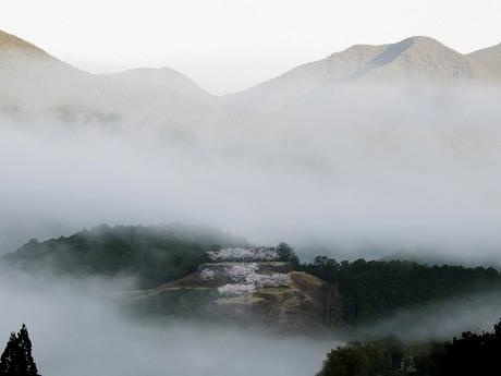 三重にもあった「天空の城」 朝霧立ち込める桜満開の熊野・赤木城跡(撮影=鈴木一弘さん)