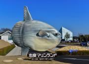 「地面に巨大マンボウ突き刺さる」 賢島・伊勢志摩サミット会場すぐの場所
