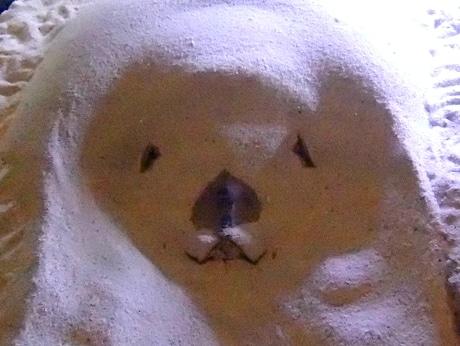 鳥羽水族館の水槽の中に謎の「クマ」出現 飼育員も首を傾げる(写真提供:鳥羽水族館)