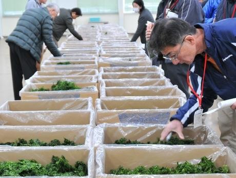 三重で県産アオサの入札会 平均落札価格1キロ1万2,308円、伊勢エビ超える