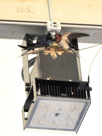 「お伊勢さん菓子博」30万人達成 いせ舞台の照明の上にツバメが巣作り