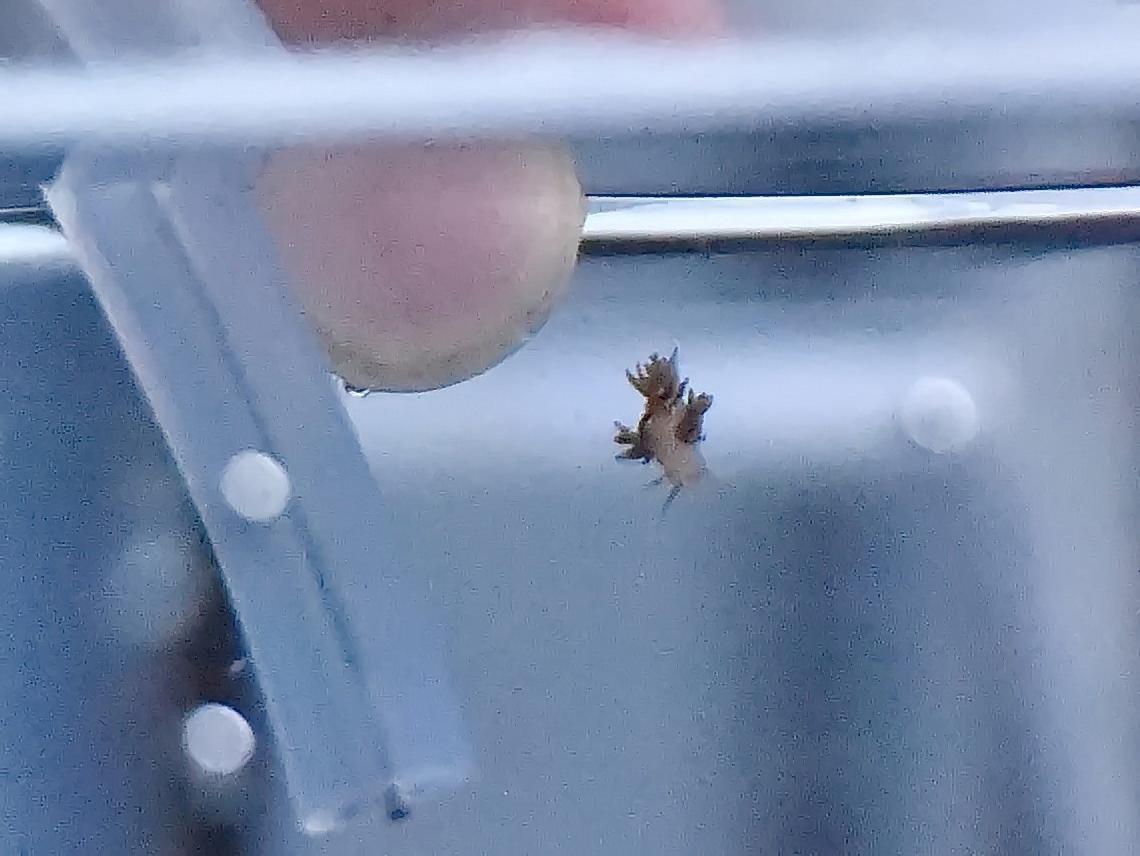「謎のウミウシ」志摩マリンランドで展示 ツイッターで話題に