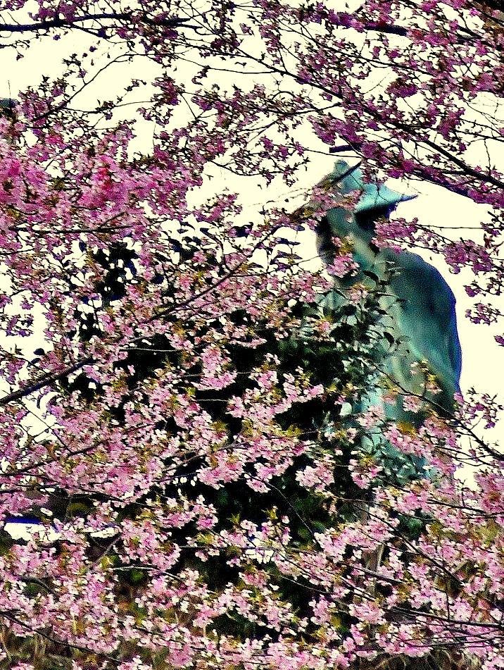 南伊勢町の瑞賢公園のサクラ満開 「江戸を作った男」河村瑞賢生誕400年