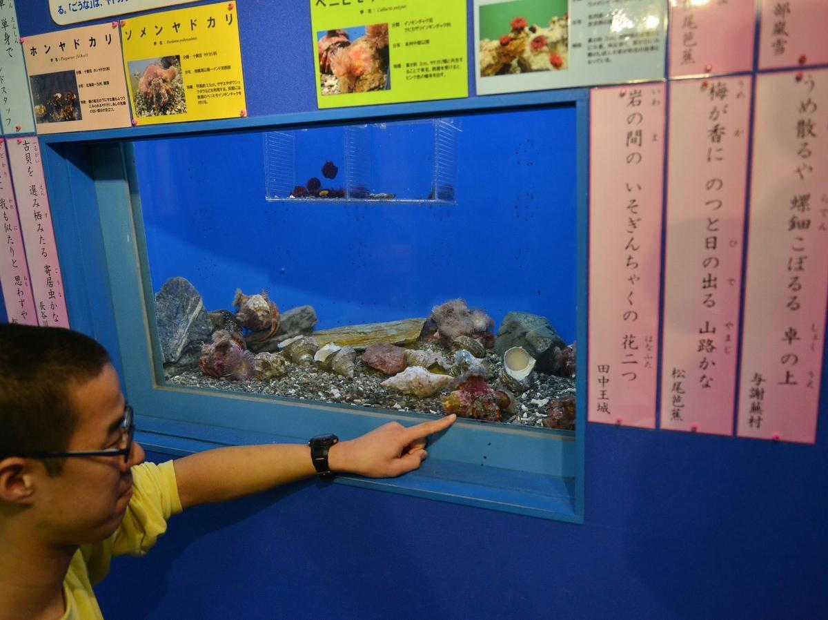 「志摩マリンランド」水族館の飼育員が俳句を詠むと魚の知識豊富でマニアックに