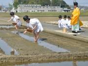 伊勢神宮の専用水田で耕作始めに豊作祈願の「神田下種祭」