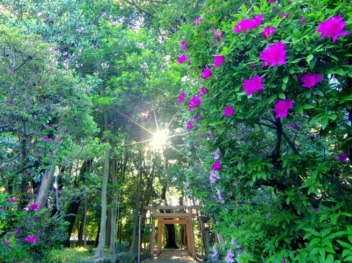 伊勢の磯神社のツツジ咲き誇る 伊勢神宮創建前・倭姫命巡幸地