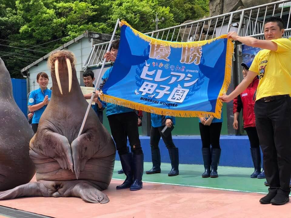 伊勢シーパラダイスのセイウチの一芸「闘魂注入で厄払い」で日本一に